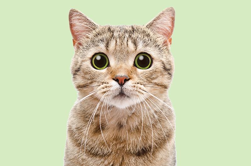 Cat Summer Preventative Care