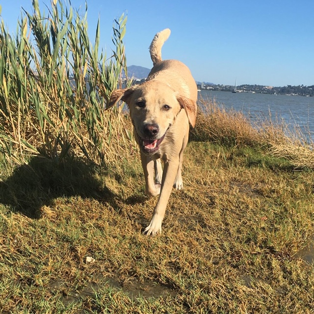 Dog Friendly Benicia
