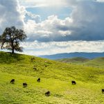 Expanding your view of county Land