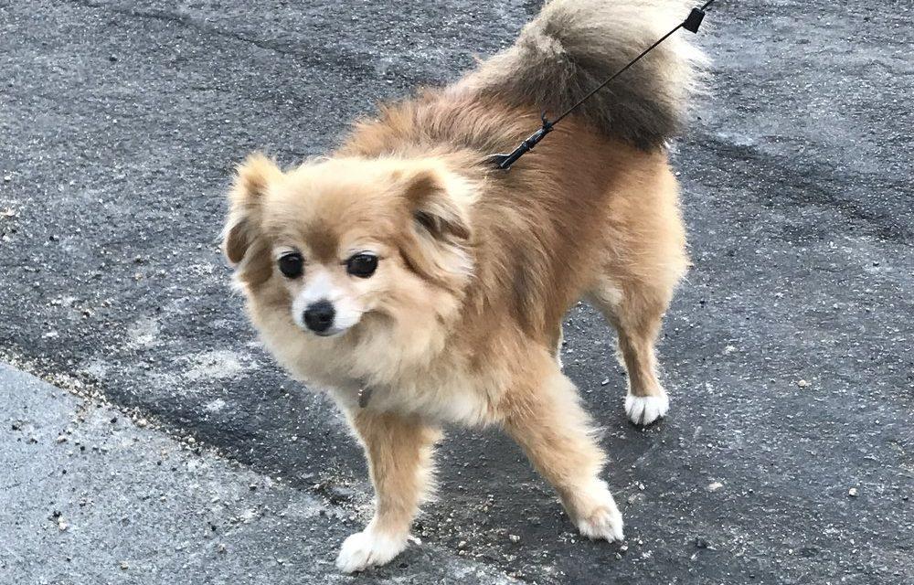 Dog Walking Playlist
