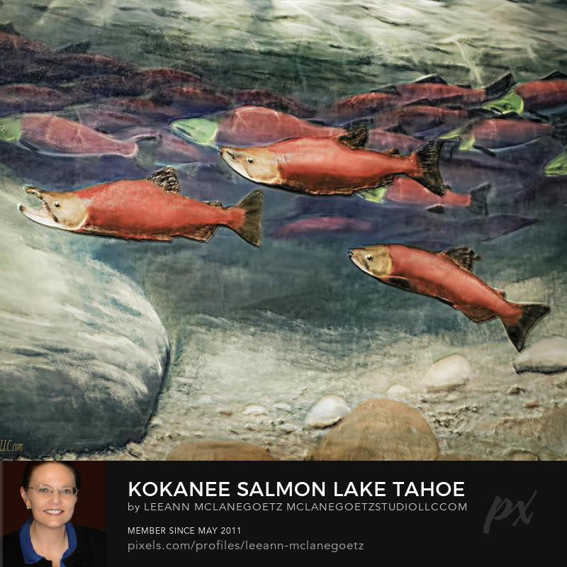 Kokanee salmon Lake Tahoe painting by Leeann McLanegoetz