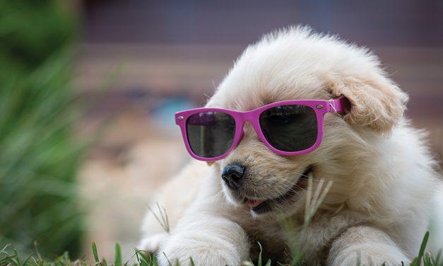 Benicia Dog Festival