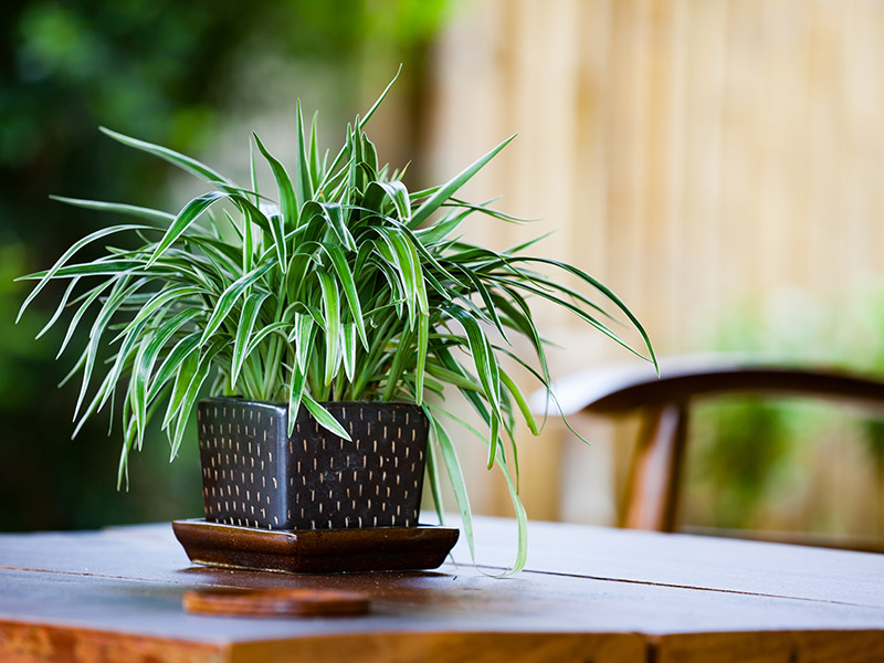 Start The Year Off Fresh With Air-filtering Houseplants