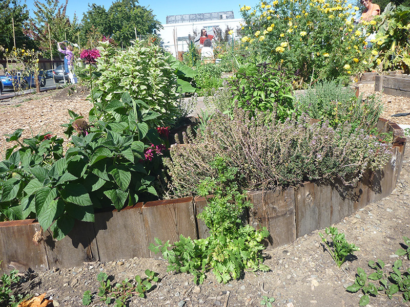 Creating Sustainable Ecosystems In Benicia With Backyard Food Forests