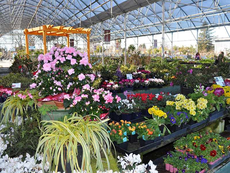 Specialty Area Nurseries Help Homeowners Meet Landscape Goals