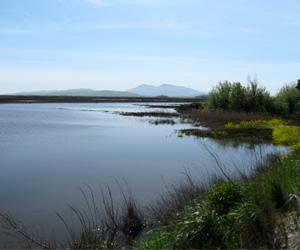 The Biodiversity of the Suisun Marsh