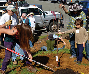A Community Orchard Grows Roots