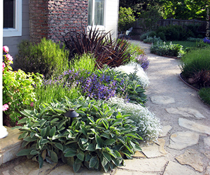 Solano County Water Agency Offers Rebates For Lawn Replacement