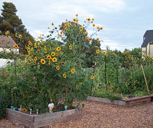 August's Backyard Garden Abundance