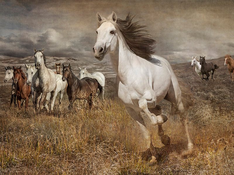 Held By A Horse Exhibit At Milinda Perry Gallery Featuring Artist Mary Aiu