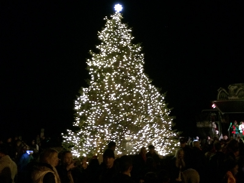 A Heartier Tree Helps Benicians Celebrate Holiday Season